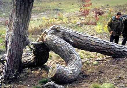Scherzi della natura